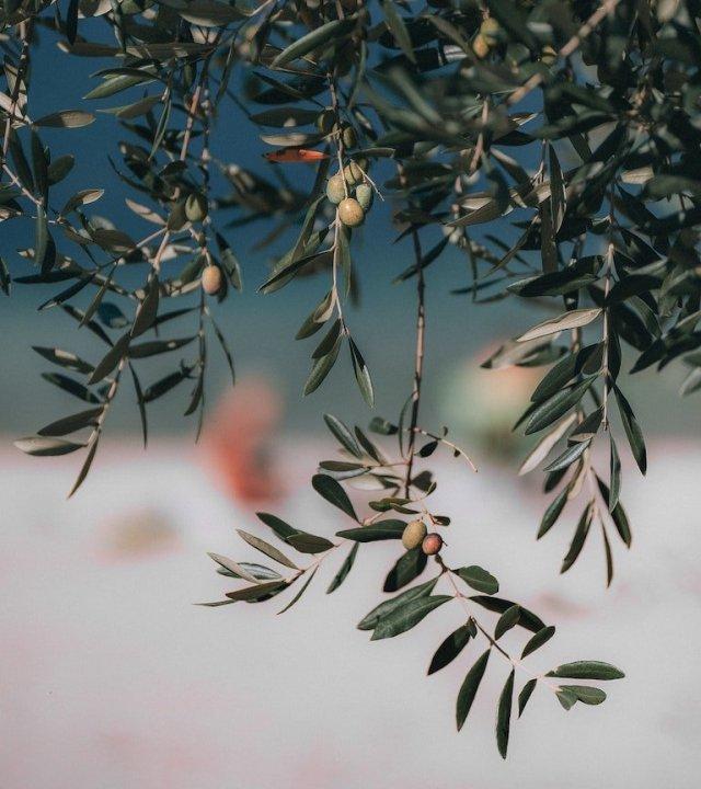 4 azioni per affrontare la stagione fredda con l'infuso di foglie d'olivo