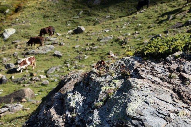 Un viaggio nell'Alpe della Estrema D'alpeggio Fontina Dop