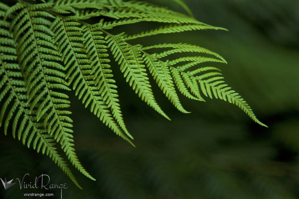 Amazing Forest Green Ferns