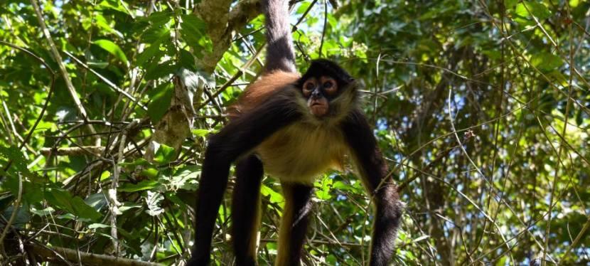 Coba + Punta Laguna + Cenote
