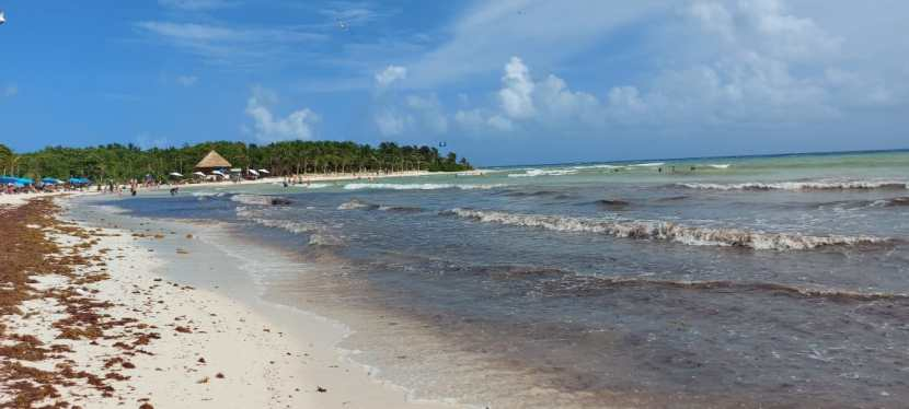 Les algues sargasses au Mexique