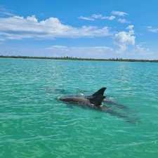 Réserve naturelle de Sian Kaan excursion avec un guide francophone. Observation des dauphins Punta Allen