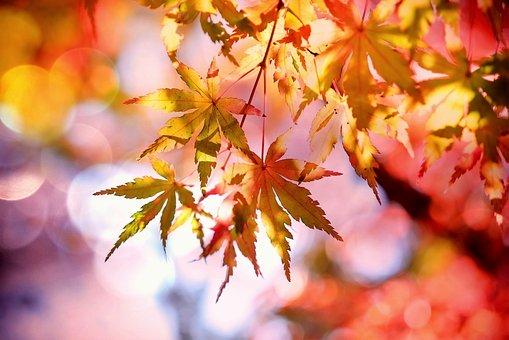 hojas, otoño
