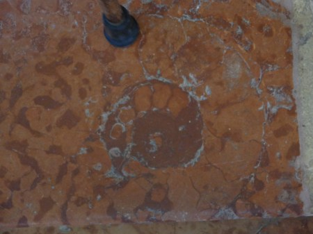 Ammonite fossil in marble floor at Sta Corona