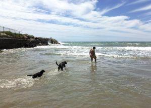 Cala Vallcarca Sitges Perros Playa Canina