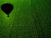 Balloon shadow on the cornfield