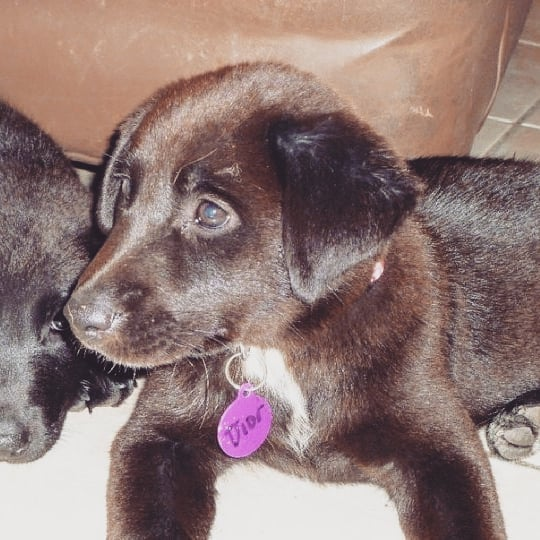 Zona's puppy picture. Her name when she was in the shelter used to be Dior and her fur used to be brown!  #borador #boradorsofinstagram #bordercollie #labrador #labradorsofinstagram #bordercolliesofinstagram #muttsofinstagram #mutt #shelterdog #shelterdogsofinstagram #rescuedog #rescuedogsofinstagram #petphotography #petsofinstagram #pet #doggo #dog #pixel2xlphotography #puppy
