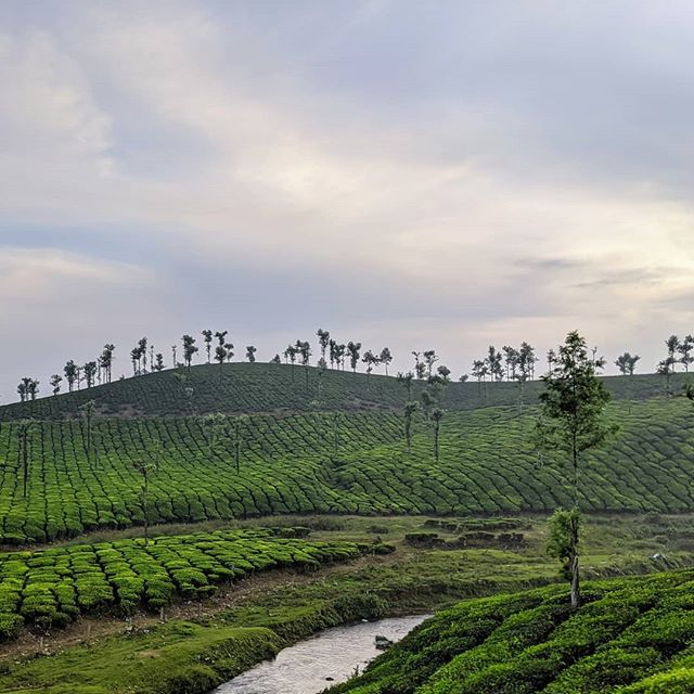 Tea Plantations in Valparai, Tamil Nadu, India.  #valparai #teaplantation #tamilnadu #india #incredibleindia #landscapephotography #landscape #amateurphotography #amateurphotographer #photography #photographer #tea