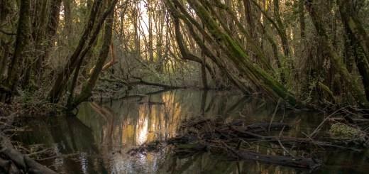 Bosque de las Sombras Lago Puelo