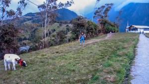 Tirolinas y otras actividades en La Casa del Árbol Baños