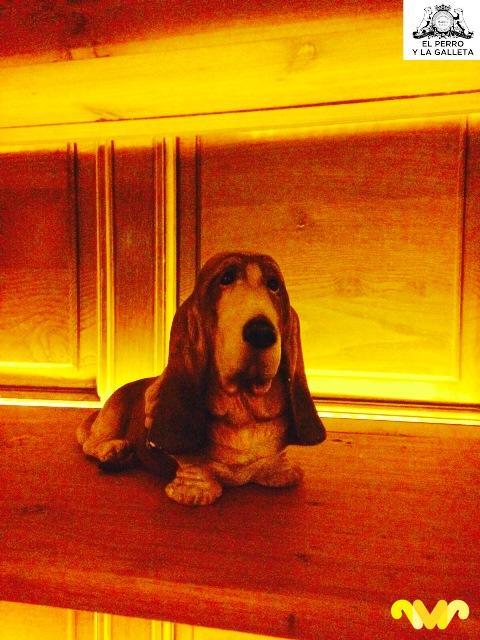 En El Perro y La Galleta todos los perros educados son ¡bienvenidos!