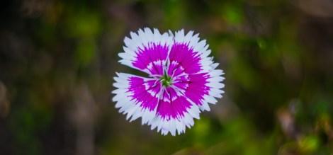 Las flores de Bach se usan para tratar situaciones a nivel emocional. Más allá del síntoma, se enfoca en llegar a la raíz de lo que causa el desequilibrio.