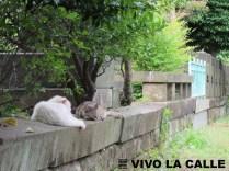Gatos y cuervos conviven en el cementerio.