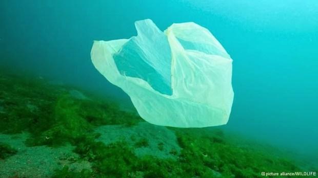 Sacola plástica no fundo do mar - Foto: Google Imagens