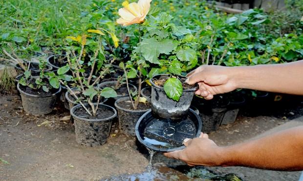 Com a ação do governo do Estado, municípios e população os casos de dengue no Tocantins foram reduzidos em 52%