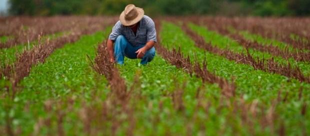 produtor-rural-adubo