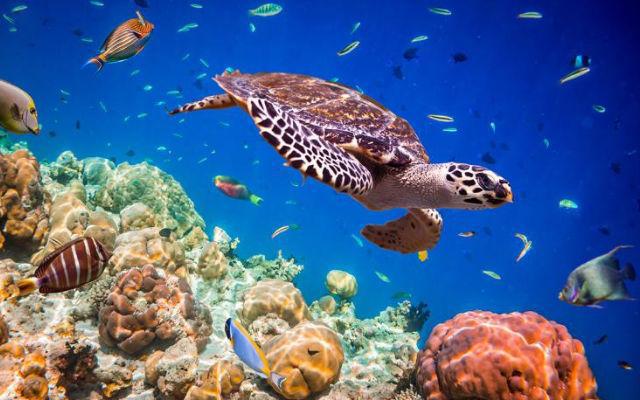 A importância de preservar os oceanos