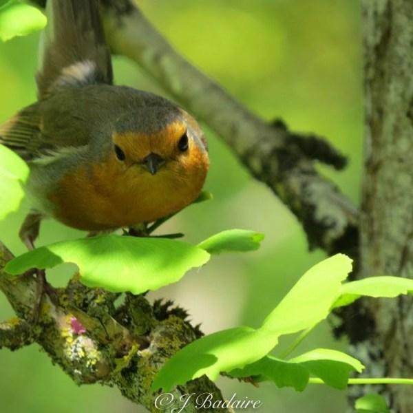 Honneur aux oiseaux