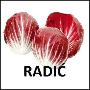 Radič