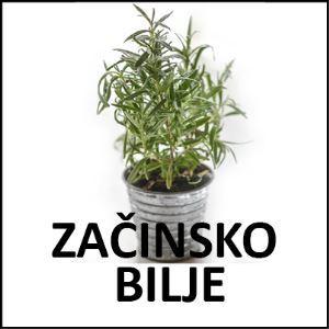 Začinsko bilje