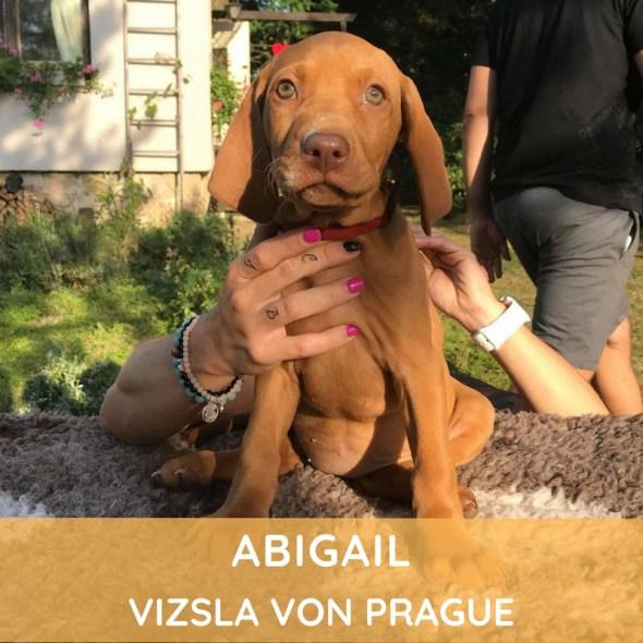 Abigail Vizsla von Prague