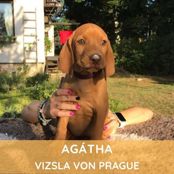 Agátha Vizsla von Prague
