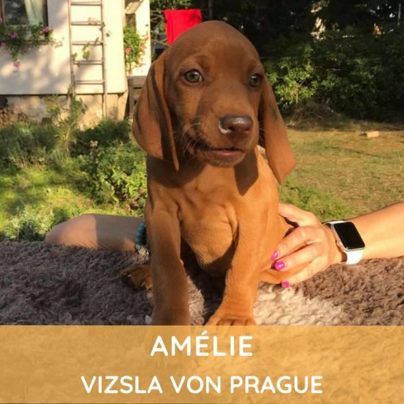 Amélie Vizsla von Prague