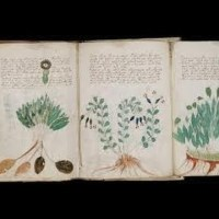 The Book That Can't Be Read - The Voynich Manuscript