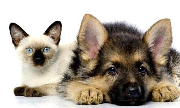 Прикольные картинки про кошек и собак (36 фото ...