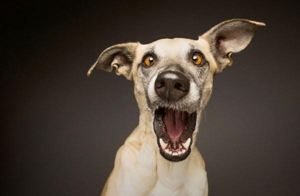Прикольные картинки про собак с надписью (36 фото ...