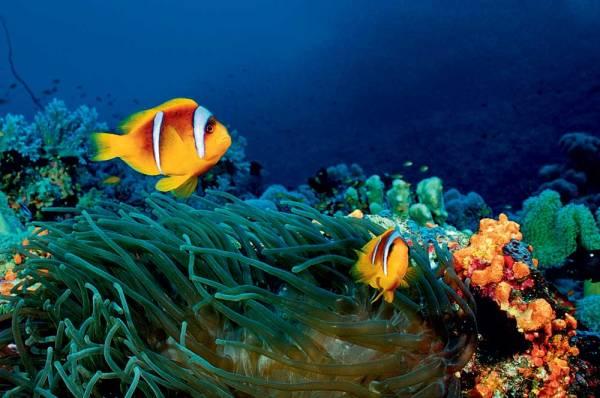 Красивые картинки морских рыбок (39 фото ...