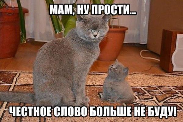 Прикольные картинки про кошек и котят (36 фото ...