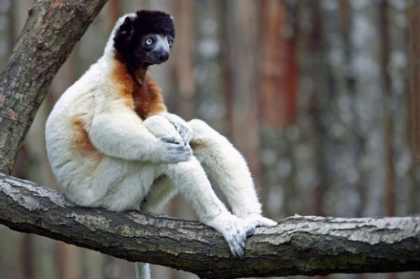 Смешные картинки животных скачать (36 фото ...