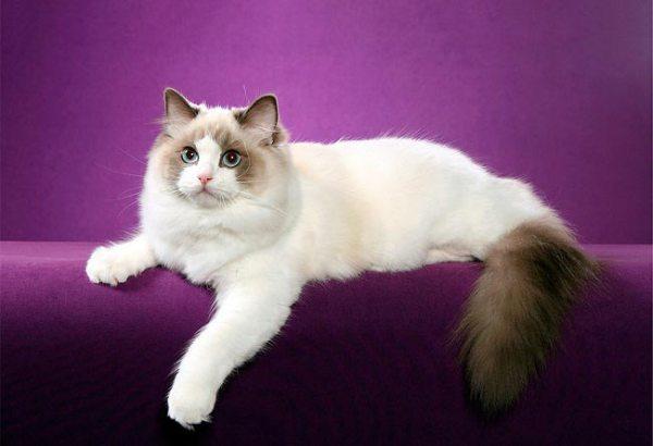 Красивые картинки про кошек (38 фото) • Развлекательные ...