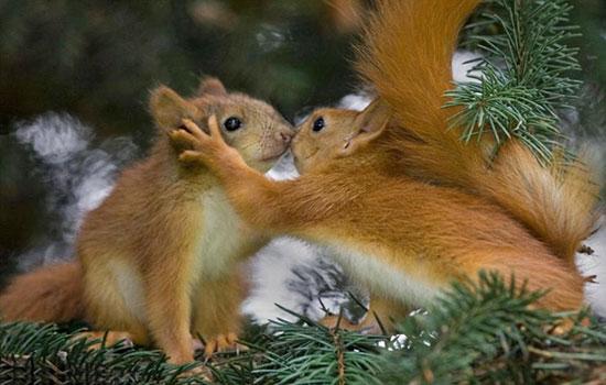 Красивые картинки про нежность и любовь (40 фото ...
