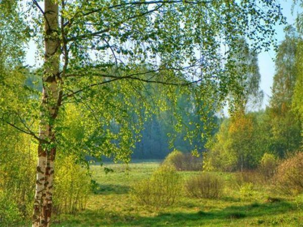 Природа России красивые картинки (36 фото ...