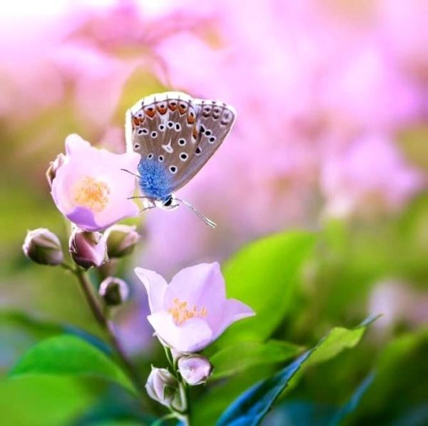 Красивые картинки с бабочками и цветами (37 фото ...