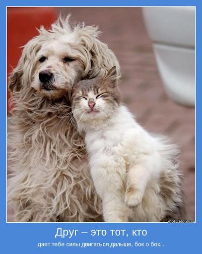 Прикольные картинки про крепкую дружбу (44 фото ...