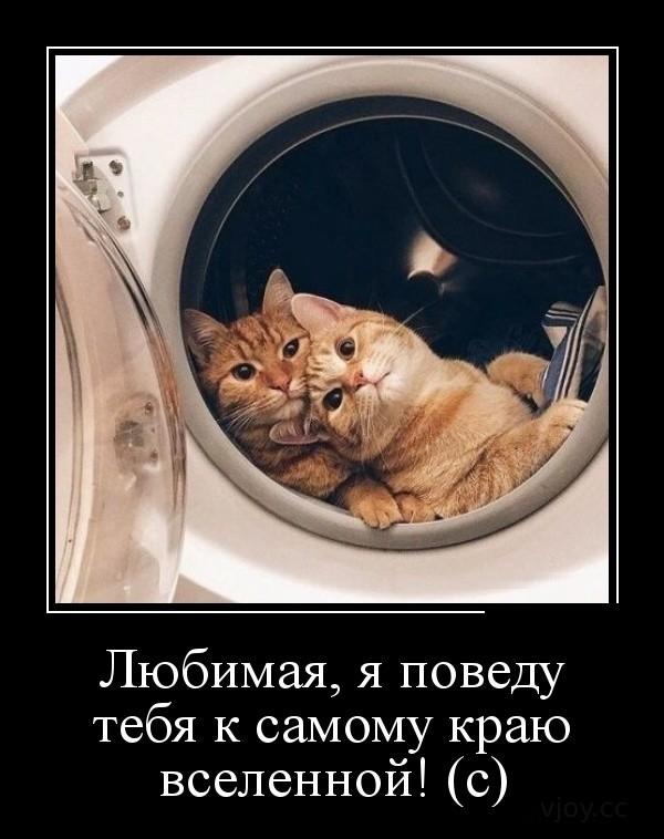 Картинки демотиваторы про смешных котов (41 фото ...