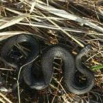 Мешканця Хмельниччини під час відпочинку у Карпатах вкусила змія