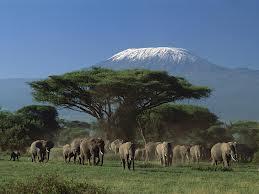 Ціни на відпочинок в Танзанії