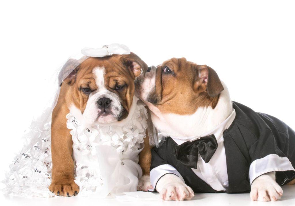 Кастрация собак: плюсы и минусы, в каком возрасте лучше делать