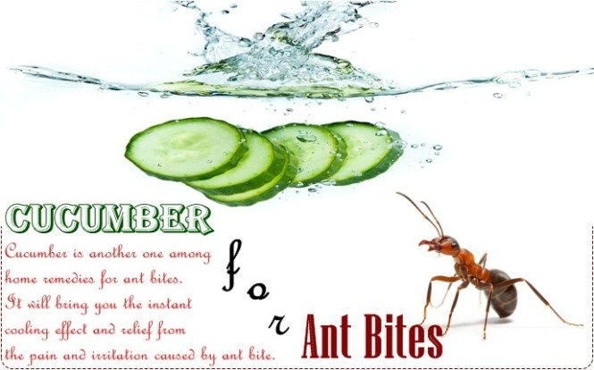 Home Remedies For Ant Bites Baking Soda