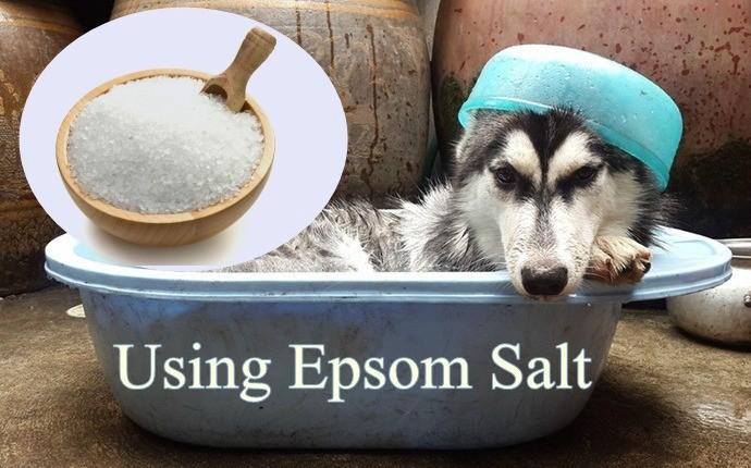 Image result for epsom salt for dogs