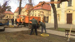 U vinkovačkom središnjem gradskom parku posađena nova stabla