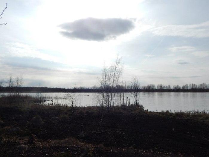 болото Оболь