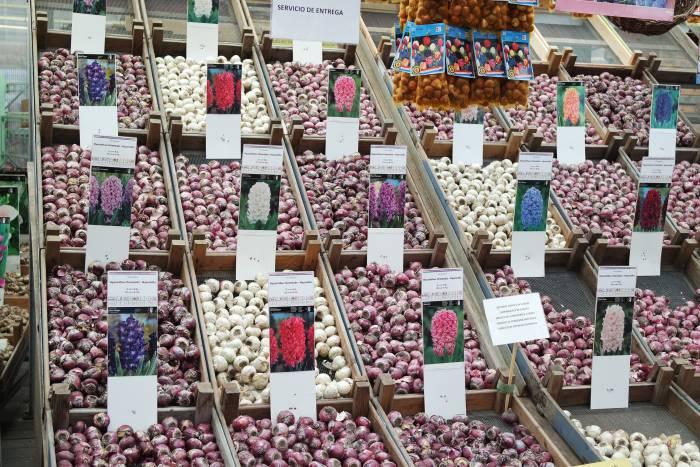 Луковицы тюльпанов на рынке в Голландии