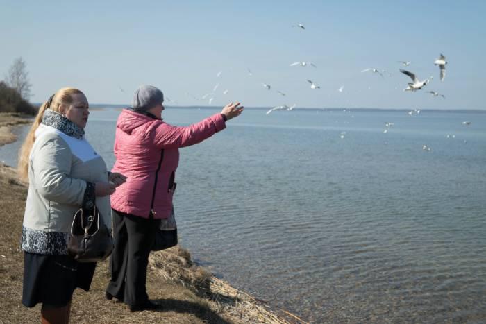 ... кормить птиц на озере. Фото Анастасии Вереск