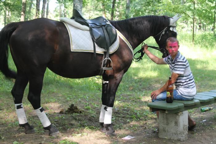 лошадь, краски, холи, витебск