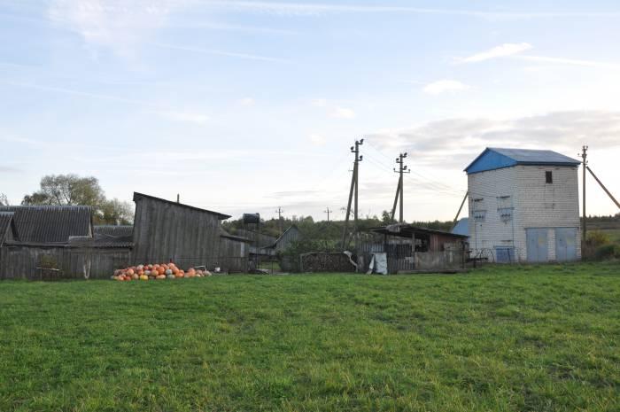 Чей-то богатый урожай тыквы. Фото Анастасии Вереск